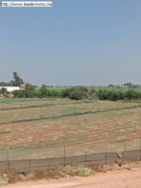 Terrain 50 hectare à Larache